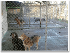 Dog Kennels. Federal Way, WA