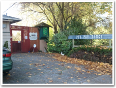 Dog and Cat Kennels Near Seatac Airport