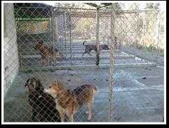 Pet Boarding Federal Way, WA